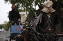 IMM tomó plan de la oposición que prohíbe carritos en Pocitos