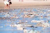 Basura en las playas: ¿A los uruguayos les falta educación para cuidar la costa?