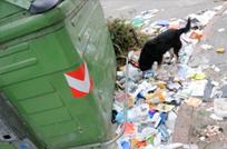 Intendencia deja sin limpiar 1440 contenedores por dia