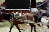 Bogotá: clasificadores pasan de carros con caballo a camiones