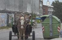 recicladores_carruajes